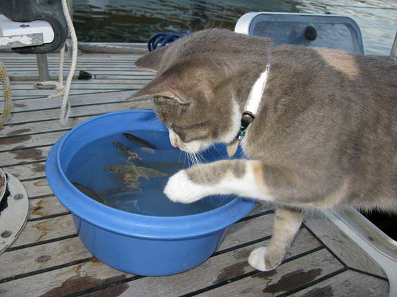 As you can see this is quite tricky. I could drown!