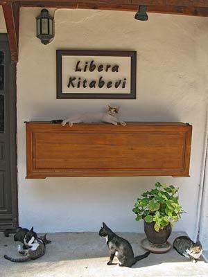 Kas cats. Source: Liz Cleere