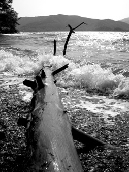 Driftwood, English Harbour