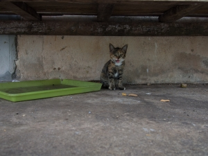 Cats hanging around by the Satun market waiting for fish
