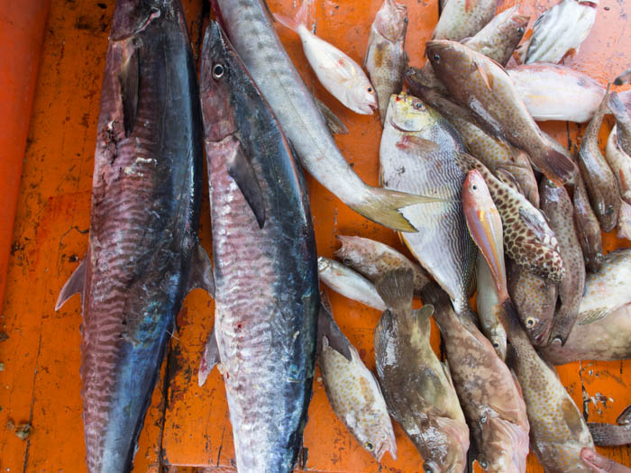 Our catch of fish