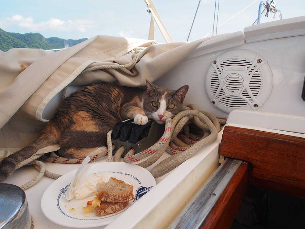 Millie the cat on a boat