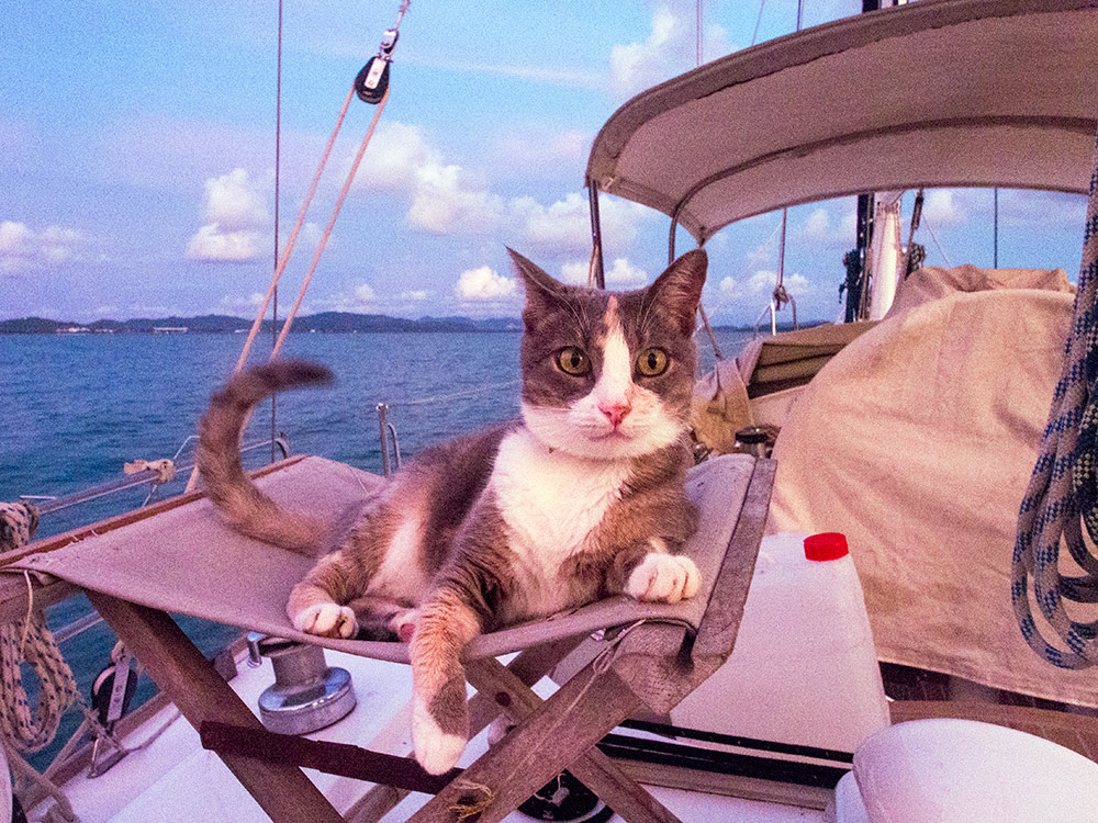 Millie the cat on a boat atop her throne in Thailand
