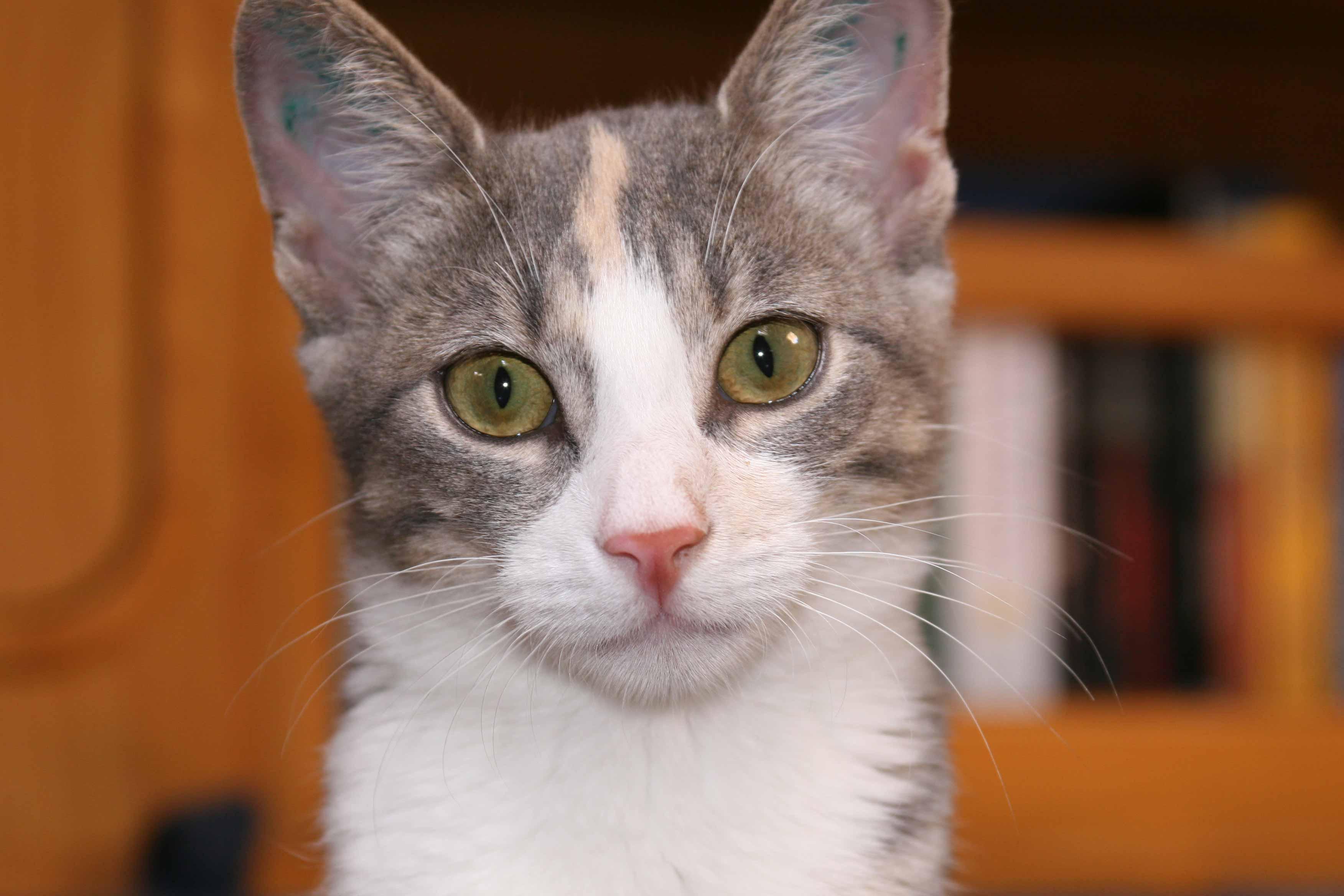 Millie cat