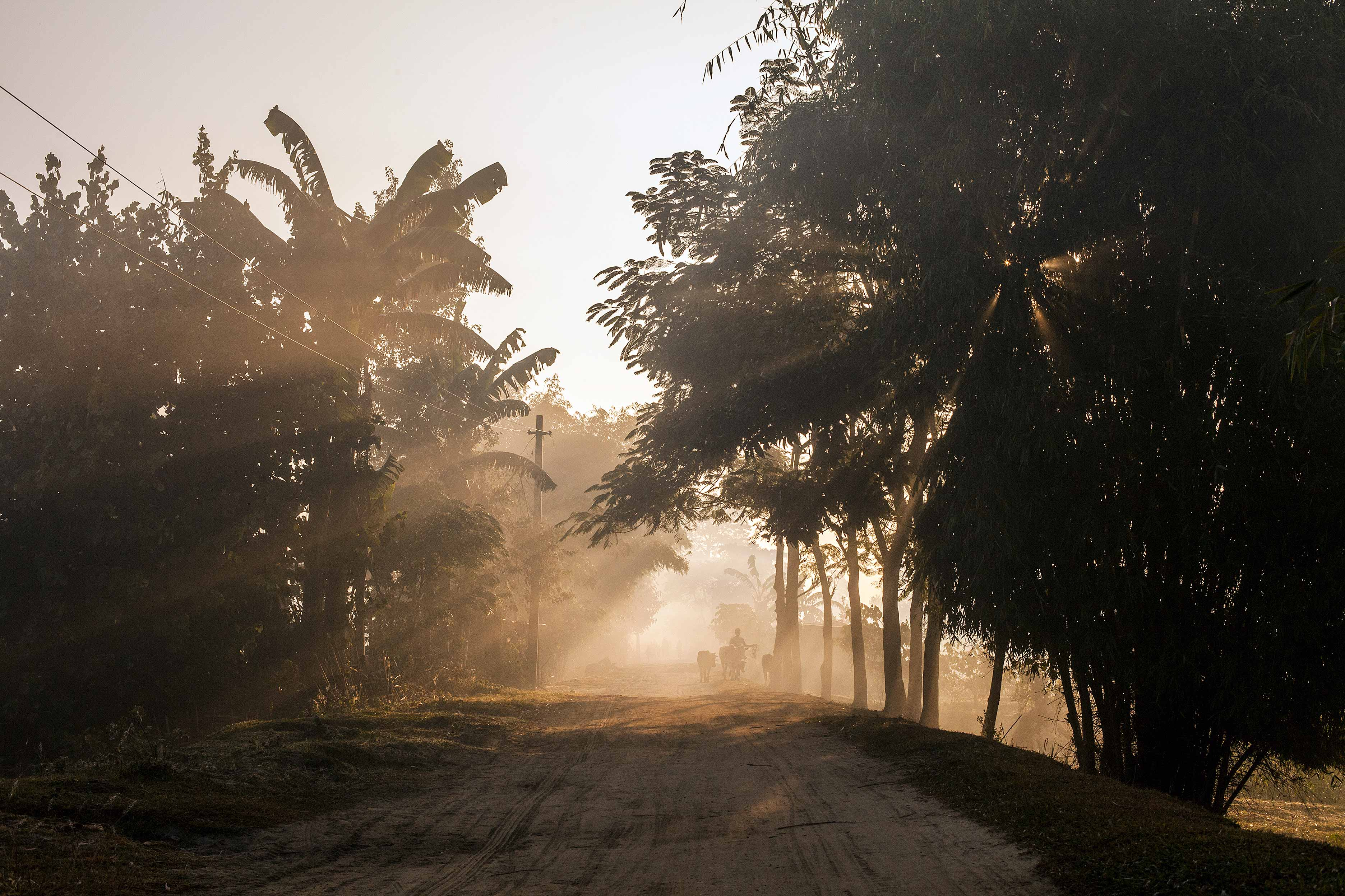Early morning herder, Majuli Island - runner-up in the Wanderlust Photography Awards and winner of two other travel photography competitions (2011)