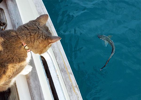 fishing on a sailboat